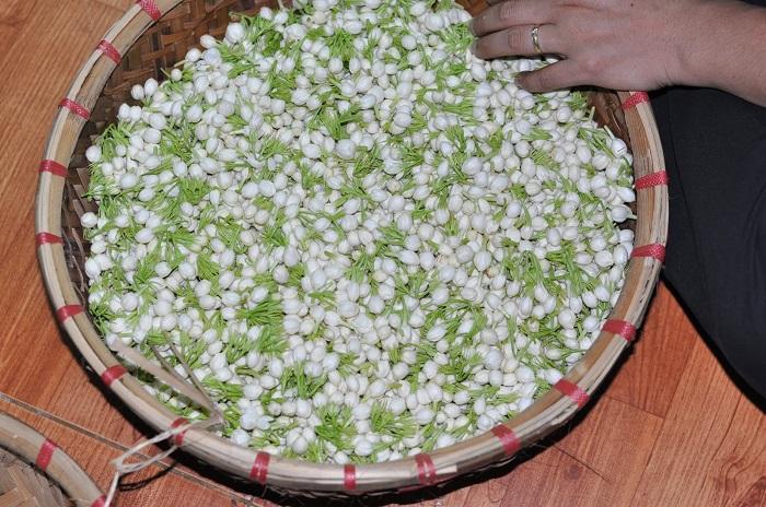 hoa dùng để ướp trà lài là nụ hoa lài quế