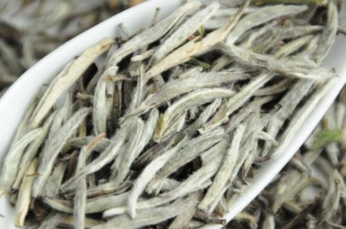 Đây bạch trà shan tuyết Tây Côn Lĩnh, những búp trà được chọn lọc hoàn toàn từ những búp có lông tơ trắng buốt