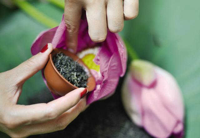 Trà được ướp từ Trà Thái Nguyên thượng hạng với hoa Sen Bách Diệp tươi ( chỉ lấy phần gạo tặng của hoa để ướp, để đảm bảo chất lượng trà đạt cao nhất)