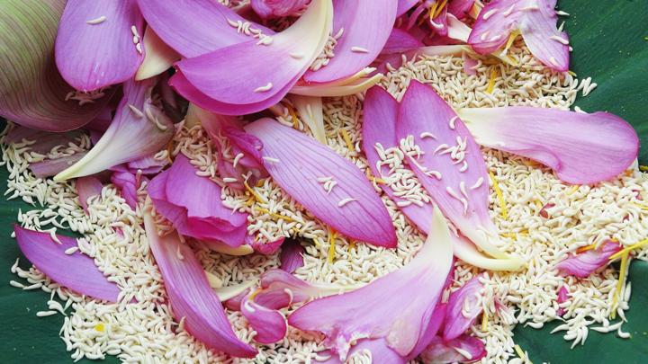 Gạo sen là cốt lõi hương thơm của trà sen