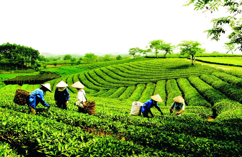 Vùng chè La Bằng thuộc huyện Đại Từ nằm ở phía Bắc của Thái nguyên
