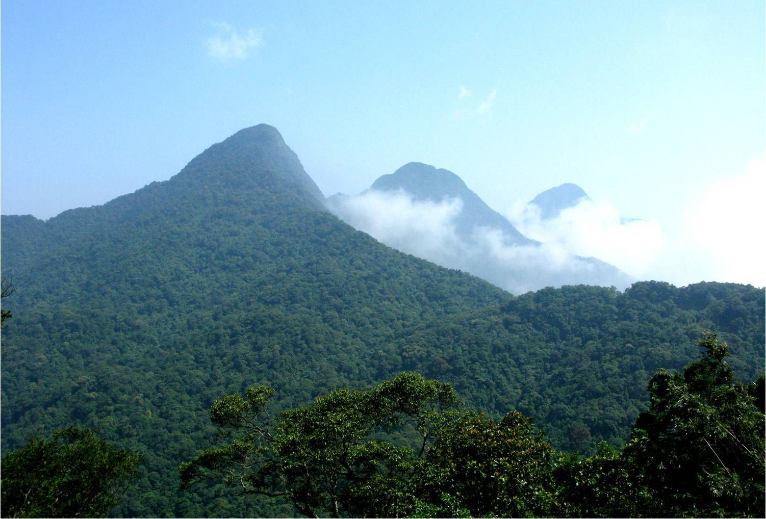 Dãy núi tam Đảo như 1 bức tường thành vững chãi che chắn cho những đồi chè khỏi những ngày nắng khắc nghiệt