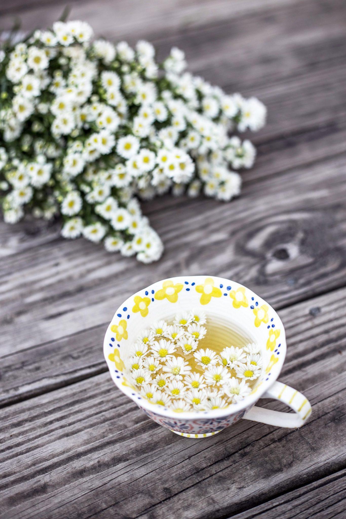 >Người ta cũng sử dụng trà hoa cúc trắng làm thuốc, làm đẹp da và thanh lọc máu.