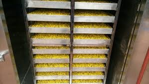 Sử dụng lò sấy chuyên dụng là phương pháp sản xuất trà cúc chất lượng nhất.
