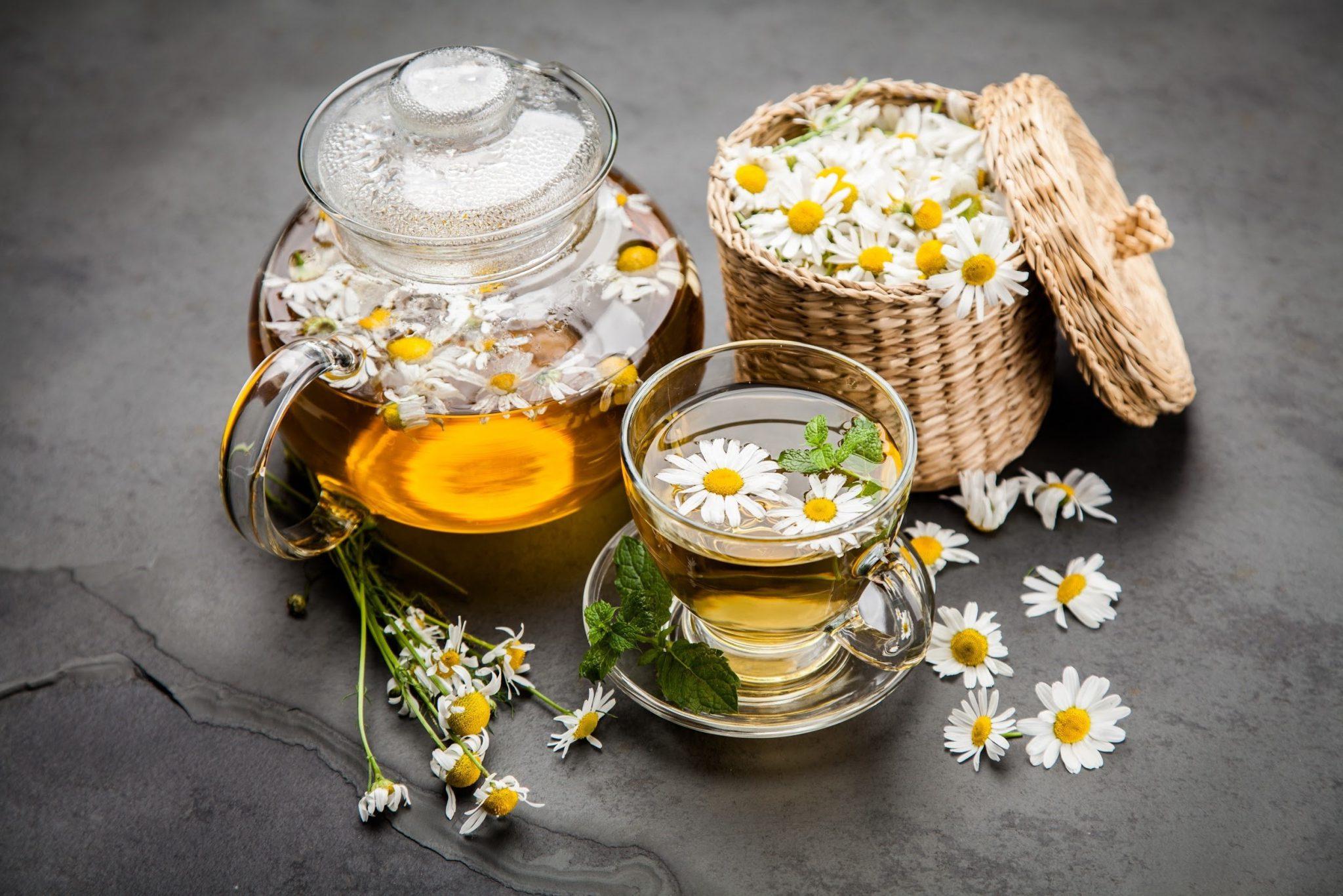 trà hoa cúc có khả năng kháng khuẩn rất tốt
