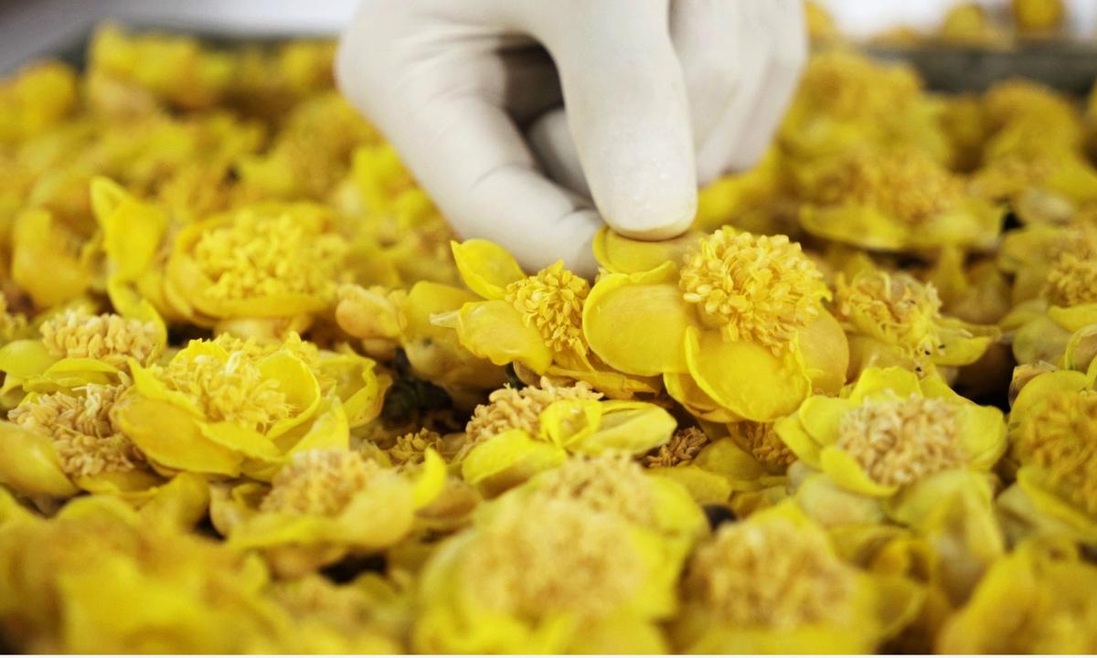 hãy tỉnh táo khi lựa chọn nơi cung cấp trà hoa vàng