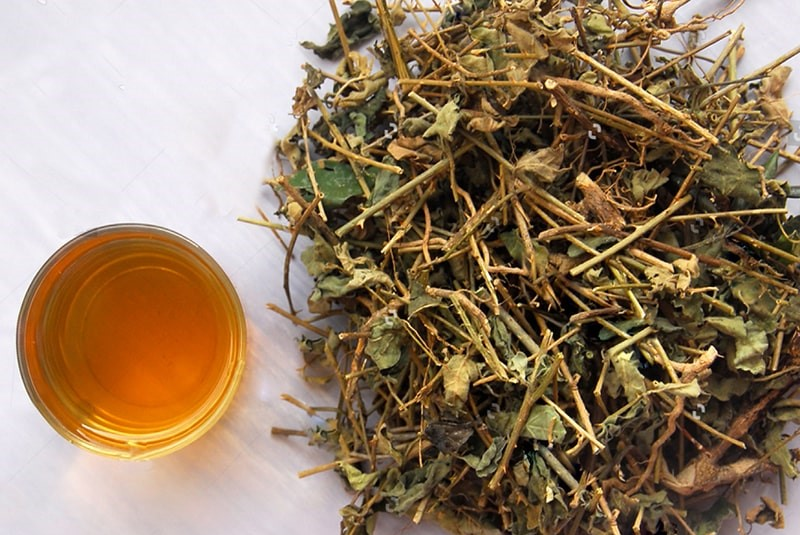 trà cà gai leo hỗ trợ điều trị bệnh gan rất hiệu quả