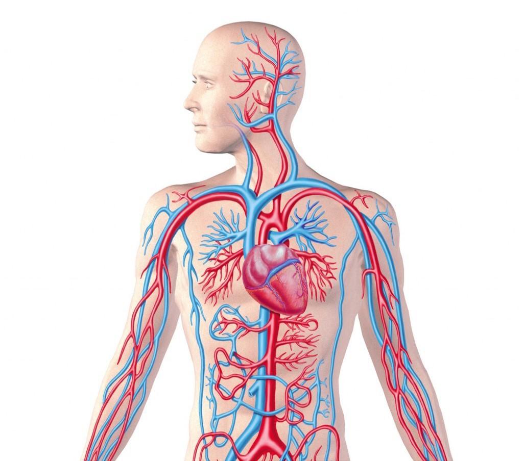 Máu huyết lưu thông kém là một trong những nguyên chính dẫn đến bệnh tật.