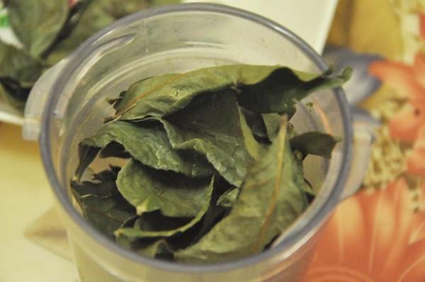 Lá trà shan tuyết được sử dụng làm trà ban cha rất to và dài, thậm chí có lá dài đến gần cả gang tay người trưởng thành
