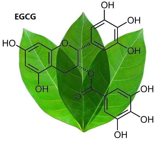 Hợp chất polyphenol thực sự là một món quà của thiên nhiên