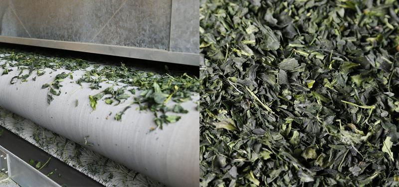 sau khi thu hoạch, lá trà sẽ được ức chế quá trình lên men để giữ được hương vị tự nhiên