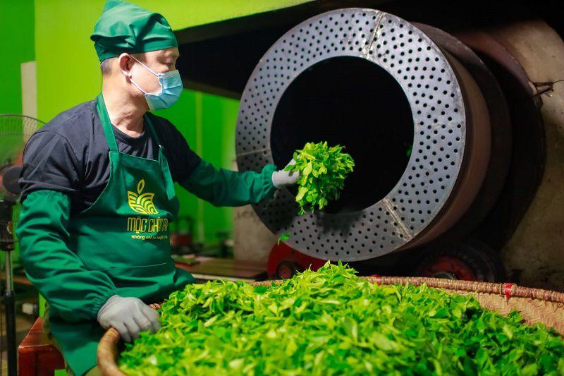 Diệt men hay còn gọi là giai đoạn ốp chè là quá trình nghệ nhân sẽ cho chè vào tôn quay làm cho chè mềm, mất đi phần nào mùi hăng. Bên cạnh đó giúp trà loại bỏ các thành phần men hay enzyme có trong lá trà xanh, nguyên nhân dẫn đến hiện tượng oxy hóa, giúp các thành phần catechin tốt cho sức khoẻ được bảo toàn nhiều nhất có thể.