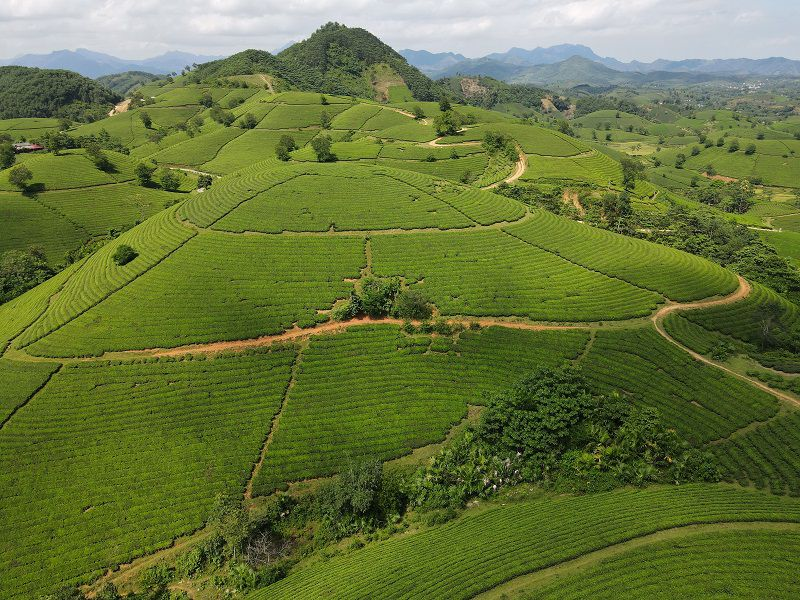 Những đồi chè ở Tân Cương, Thái Nguyên - Nơi làm ra những loại trà Thái Nguyên thượng hạng