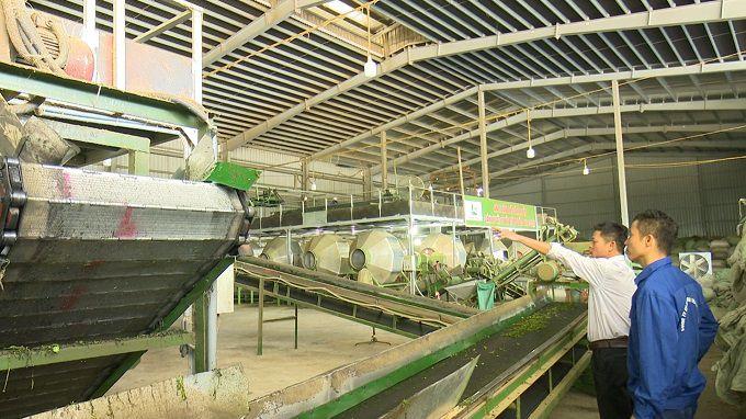 Một góc xưởng sản xuất chè ở Thái Nguyên